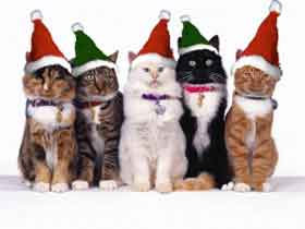 uploads/vic_imgs/christmas-cats-5161.jpg